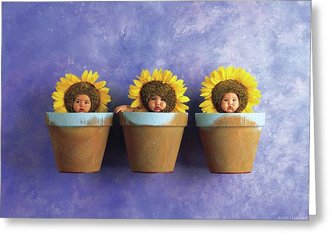 Yellow Greeting Cards - Sunflower Pots Greeting Card by Anne Geddes