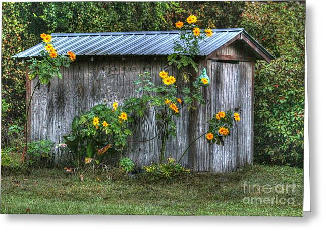 Sheds Greeting Cards - Sunflower Shed Greeting Card by Myrna Bradshaw