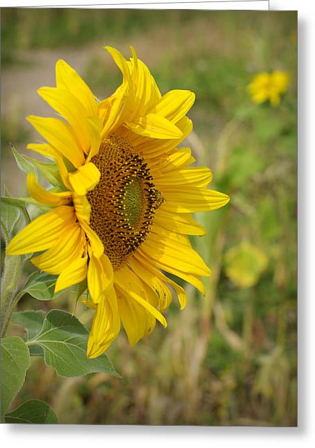 Sunflower Show Off Greeting Card by Linda Mishler