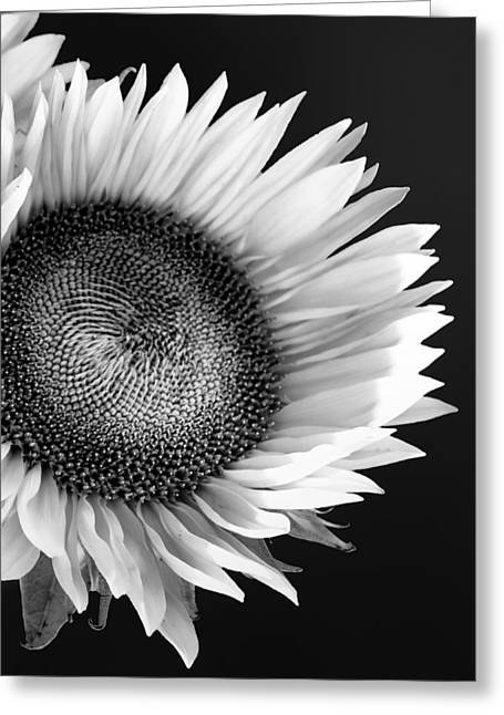Sunflower Supermodel Greeting Card by William Dey