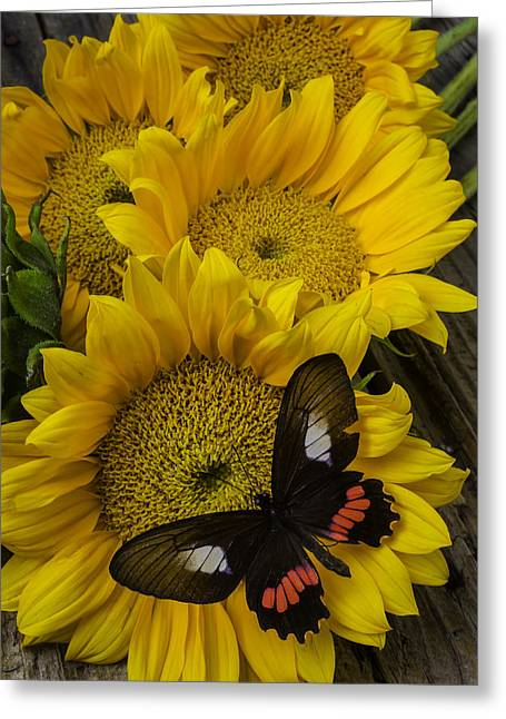 Sunflower With Wonderful Butterfly Greeting Card by Garry Gay