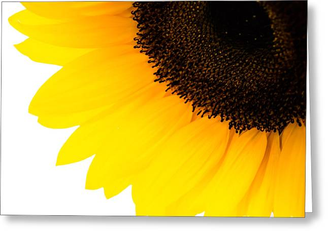 Yellow Sunflower Pyrography Greeting Cards - Sunflower3 Greeting Card by Olga Photography