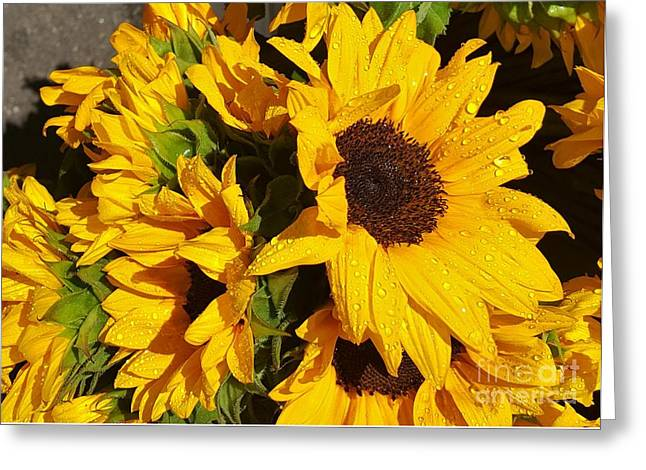 Bloosom Greeting Cards - Sunflowers after rain Greeting Card by Jasna Gopic