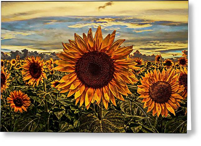 Yellow Sunflower Greeting Cards - Sunflowers Greeting Card by Alexey Bazhan