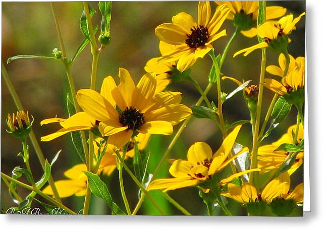 Sunflowers Along The Trail Greeting Card by Barbara Bowen