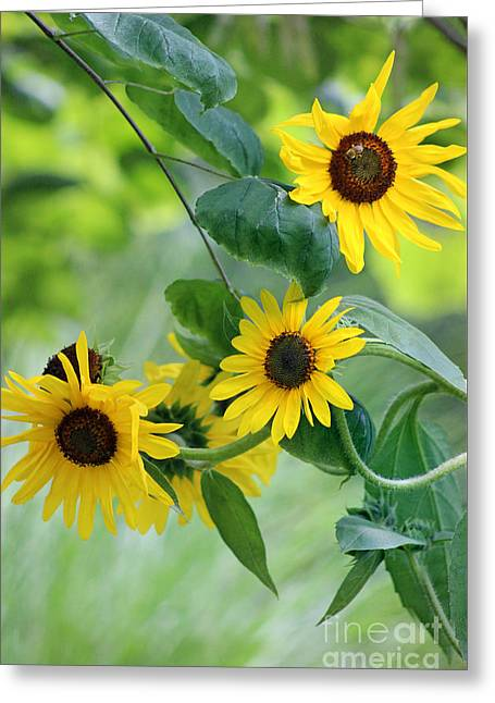 Geometric Shape Greeting Cards - Sunflowers and Redbud Greeting Card by Karen Adams