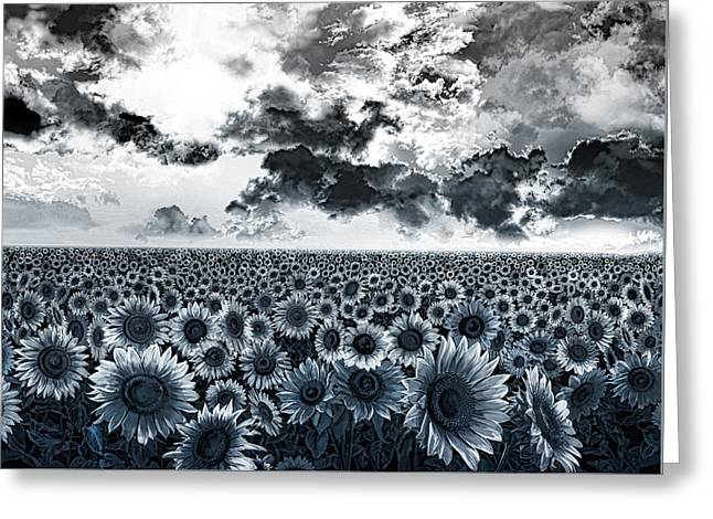 Garden Scene Digital Greeting Cards - Sunflowers filed 2 Greeting Card by MB Art factory