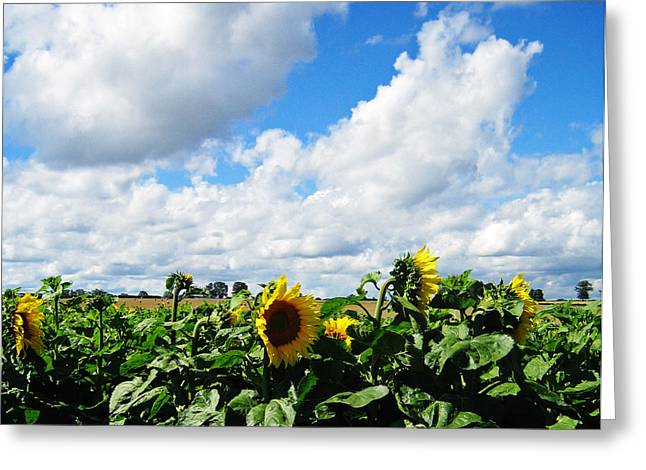 Southern France Greeting Cards - Sunflowers Greeting Card by Jeff Barrett
