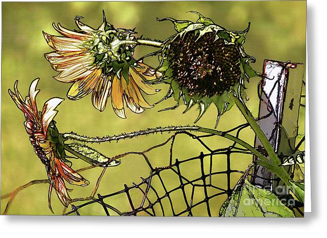 Disk Greeting Cards - Sunflowers on a Fence Greeting Card by Susan Isakson