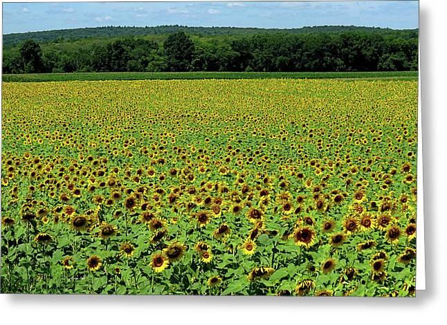 Sunflowers Sunflowers Greeting Card by George Savic