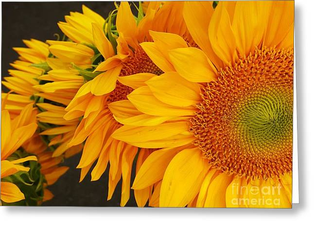 Bloosom Greeting Cards - Sunflowers Train Greeting Card by Jasna Gopic