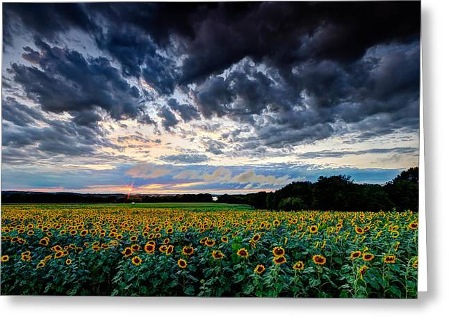 Sunflowers Under Stormy Skies Greeting Card by Mike Dooley