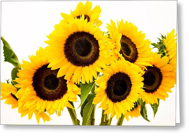 Yellow Sunflower Pyrography Greeting Cards - Sunflowers6 Greeting Card by Olga Photography