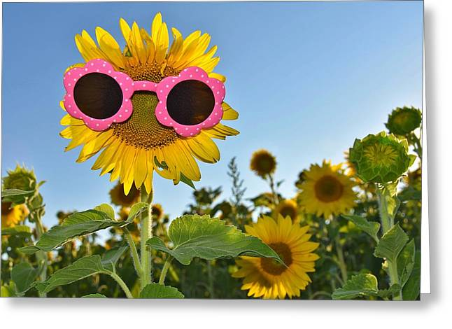 Bold Style Greeting Cards - Sunglasses On Sunflower Greeting Card by Maria Dryfhout