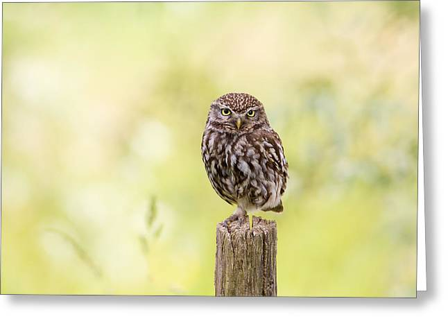 Sunken In Thoughts - Staring Little Owl Greeting Card by Roeselien Raimond