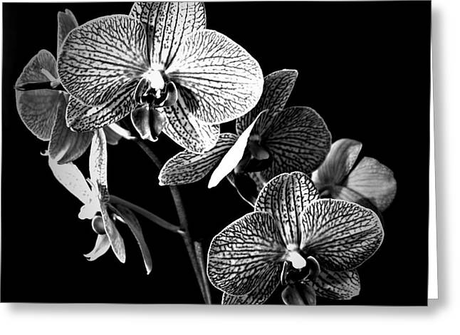 Sunkissed In Monochrome Greeting Card by Chalet Roome-Rigdon