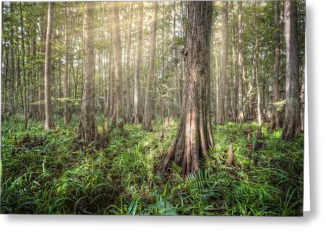 Reflections In River Greeting Cards - Sunlight in the Glade Greeting Card by Debra and Dave Vanderlaan
