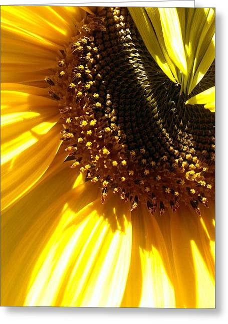 Yellow Sunflower Greeting Cards - Sunlight Shadows Greeting Card by LKB Art and Photography