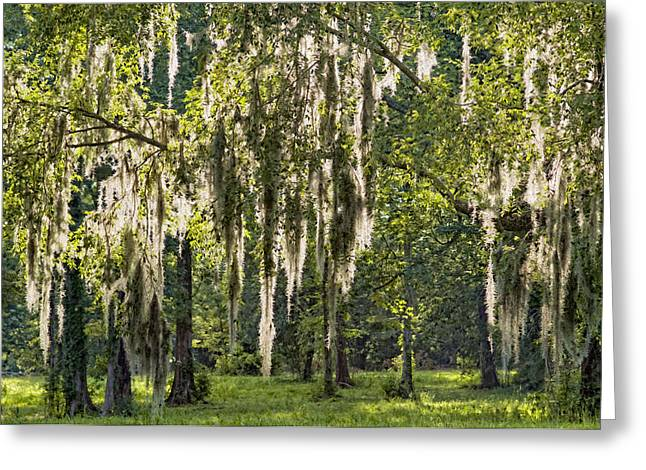 Streaming Greeting Cards - Sunlight Streaming through Spanish Moss Greeting Card by Bonnie Barry