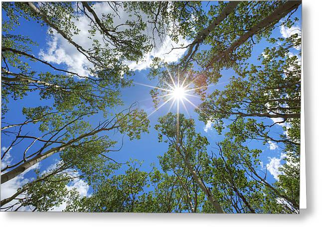 Print Photographs Greeting Cards - Sunlight through Colorado Aspen 1 Greeting Card by Rob Greebon
