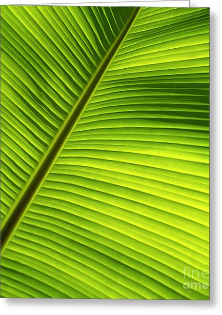 Moist Greeting Cards - Sunlit Banana Leaf Greeting Card by Carl Shaneff - Printscapes