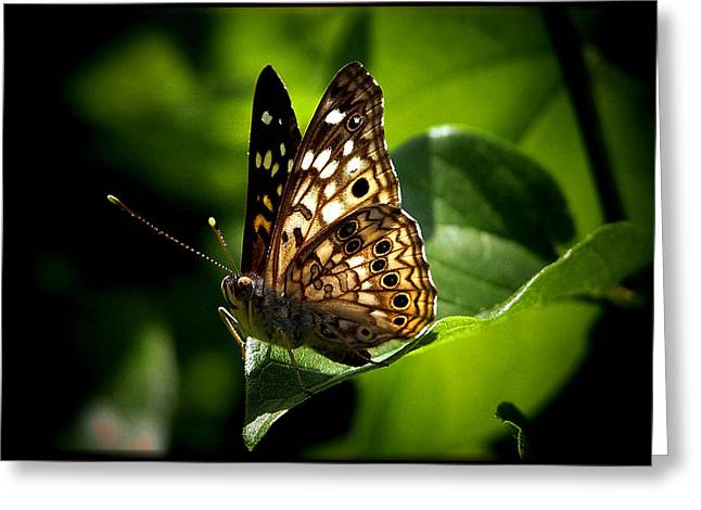 Fantasy Tree Art Greeting Cards - Sunlit Butterfly Greeting Card by Karen M Scovill
