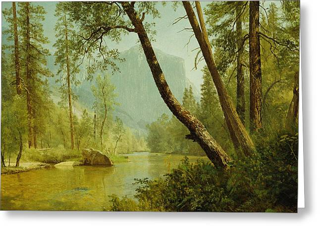 Sunlit Greeting Cards - Sunlit Forest Greeting Card by Albert Bierstadt