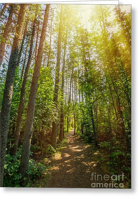 Green Day Greeting Cards - Sunlit Forest Greeting Card by Verena Matthew