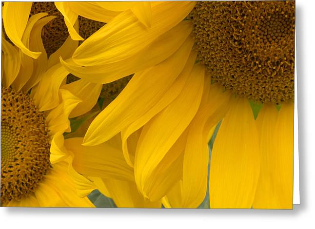 Greeting Cards - Sunlit Sunflower Trio Greeting Card by Ann Horn