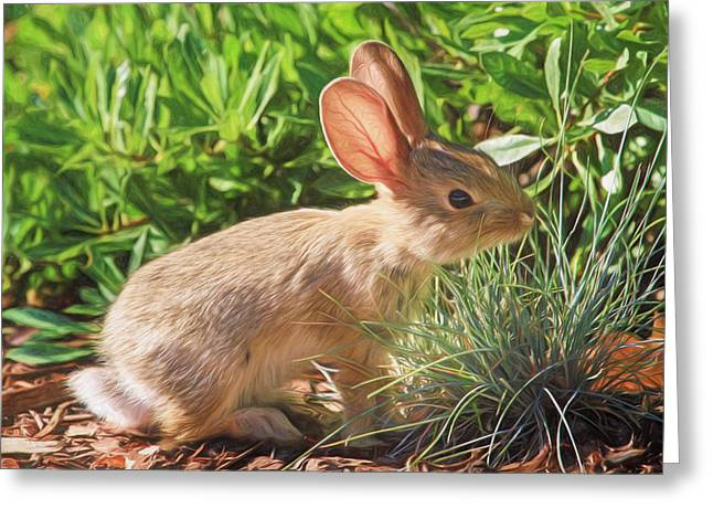 Hare Greeting Cards - Sunny Bunny Greeting Card by Donna Kennedy