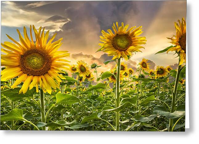 Swiss Photographs Greeting Cards - Sunny Faces II Greeting Card by Debra and Dave Vanderlaan