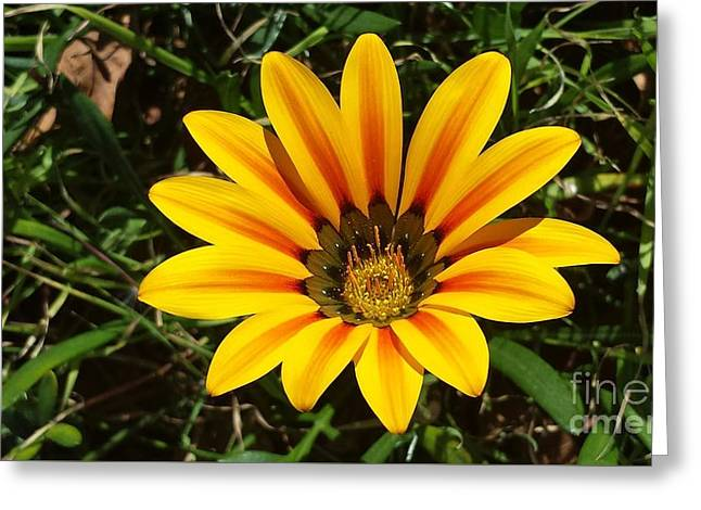 Bloosom Greeting Cards - Sunny Flower by Jasna Gopic Greeting Card by Jasna Gopic