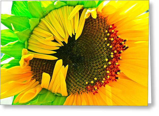 Sunflower Photograph Greeting Cards - Sunny Greeting Card by Gwyn Newcombe
