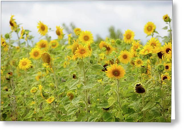 Sunny Roadside Greeting Card by Rebecca Cozart