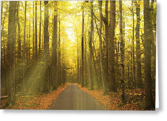 Tennessee Historic Site Greeting Cards - Sunny Roaring Fork Road Greeting Card by Jonas Wingfield