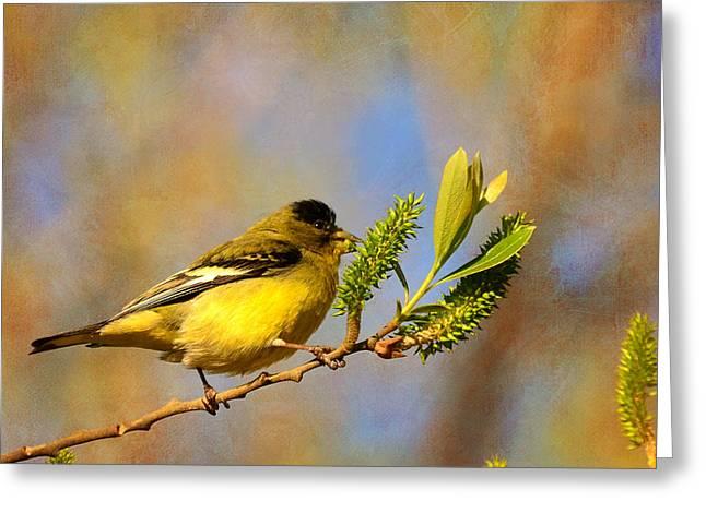 Feeding Birds Greeting Cards - Sunny Side Down Greeting Card by Fraida Gutovich