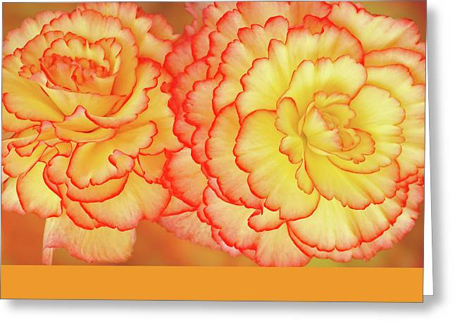 Begonia Garden Greeting Cards - Sunny Side Up - Begonia Horizontal Greeting Card by Gill Billington