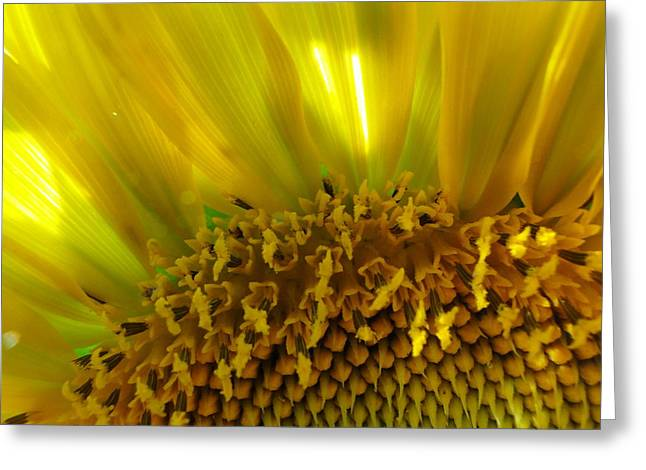 Sunny Sunflower Greeting Card by Liz Vernand