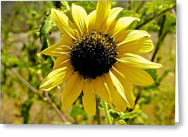 Sunny Surprise In The Middle Of Nowhere Greeting Card by Barbara Zahno
