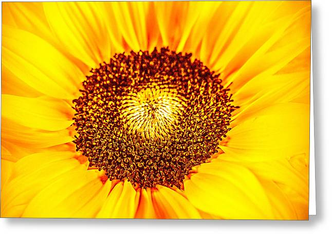 Bronce Greeting Cards - Sunny Yellow Greeting Card by Mona Stut