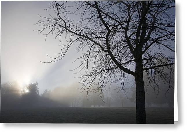 Tuttle Greeting Cards - Sunrays Through Fog Greeting Card by Craig Tuttle