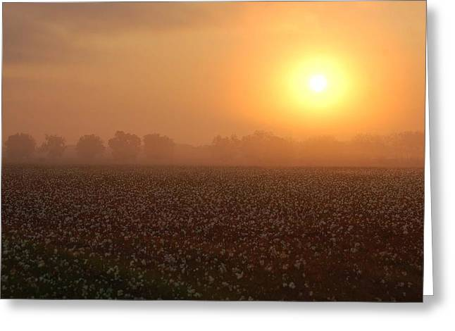 Watermelon Greeting Cards - Sunrise and the Cotton Field Greeting Card by Michael Thomas