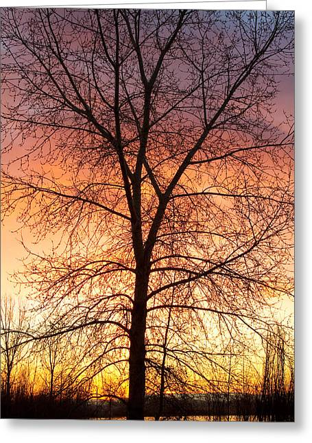 Lightning Gifts Greeting Cards - Sunrise December 16th 2010 Greeting Card by James BO  Insogna