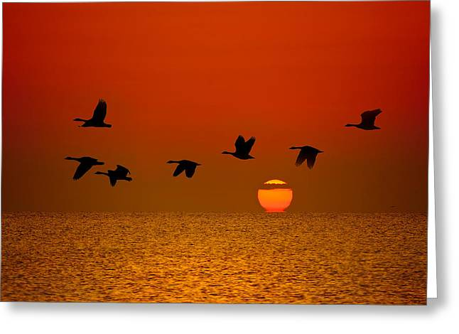 Geese Photographs Greeting Cards - Sunrise Flight Greeting Card by Steve Gadomski