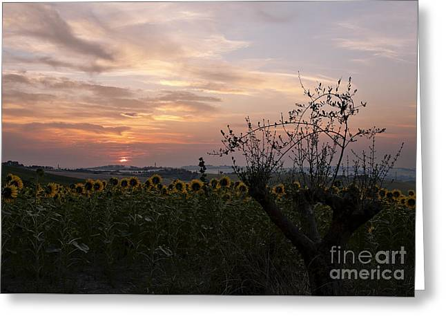 Sunrise From Morro D'alba, Italy Greeting Card by Luigi Morbidelli