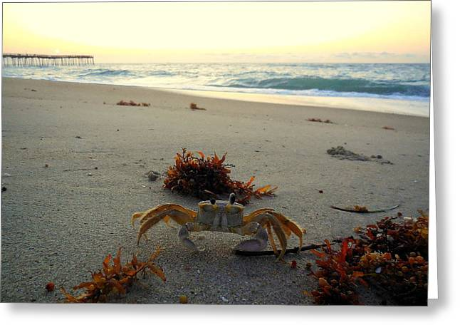 Recently Sold -  - Kite Greeting Cards - Sunrise Ghost Crab 2 7/29 Greeting Card by Mark Lemmon