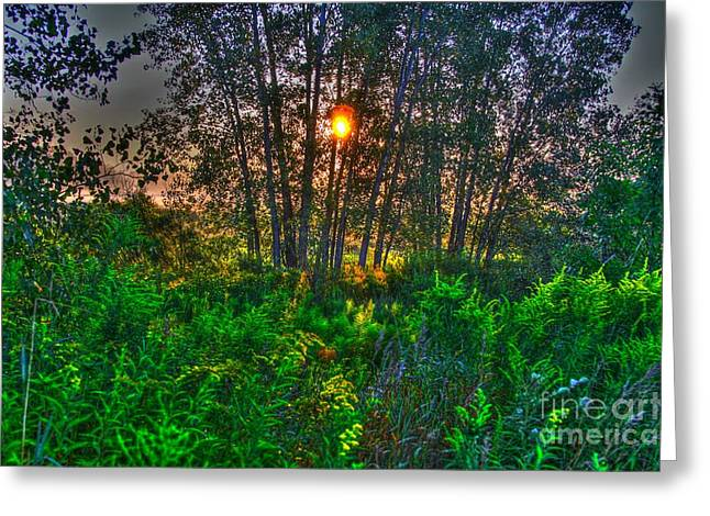 Sunrise In The Swamp-4 Greeting Card by Robert Pearson