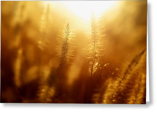 Sunrise In Tilles Park St Louis Greeting Card by Mountain Dreams