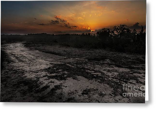 Orange Tapestries - Textiles Greeting Cards - Sunrise in Woods Greeting Card by James Hennis