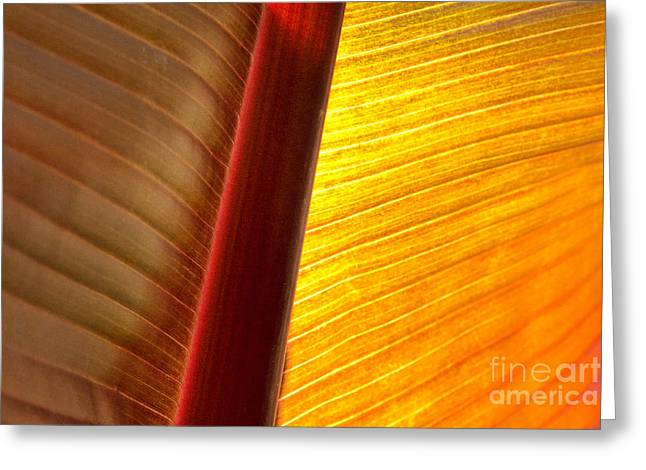 Sunrise Greeting Card by Marilyn Cornwell